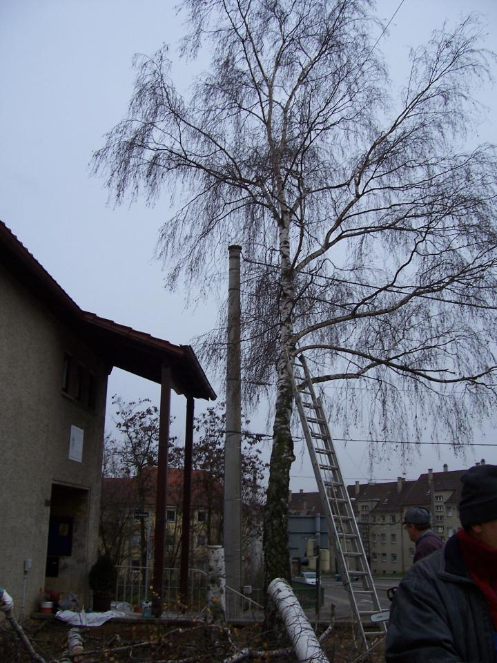 Decembrie, 8 - Se curata gradina